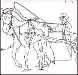 "cal si caruta ""La ușă am doar o hârțoagă"" -  Maria Suharu ""La ușă am doar o hârțoagă"" –  Maria Suharu cal si caruta 155x150"